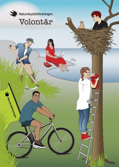 illustration_naturskyddsforeningen_volontar_folder_annika_starner_design