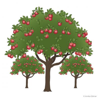 Tre äppelträd med röda äpplen